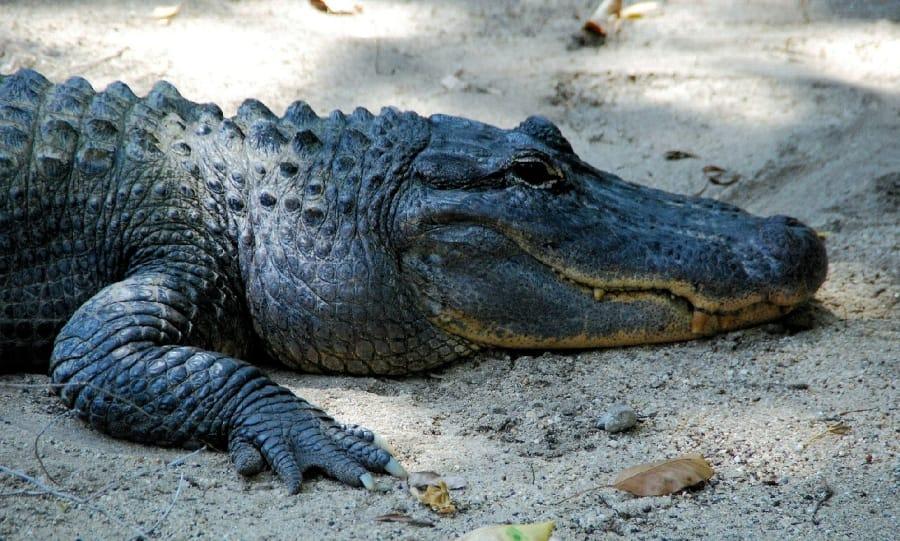 TravelXL-van-Limburg-AUSTRALIE-krokodil