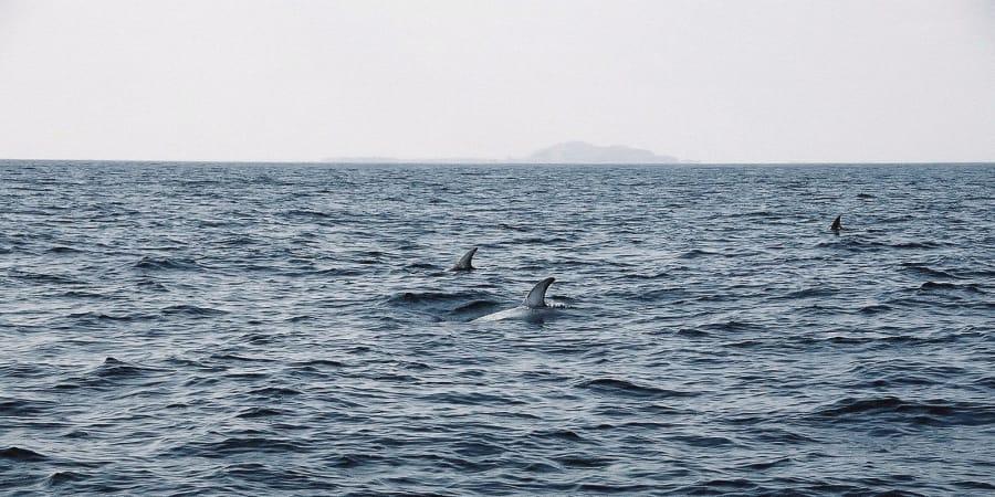 TravelXL-van-Limburg-IJSLAND-dolfijnen
