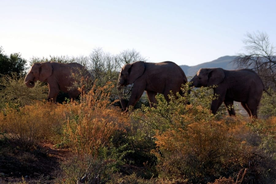 TravelXL-van-Limburg-Zuid-AFRIKA-olifanten
