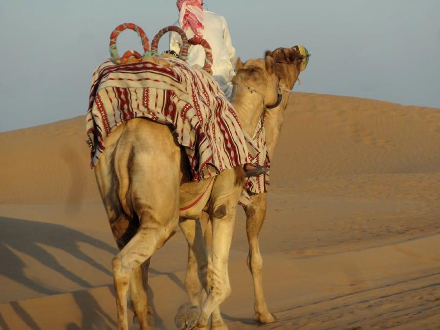 TravelXL-van-Limburg-DUBAI-kameel-woestijn-safari