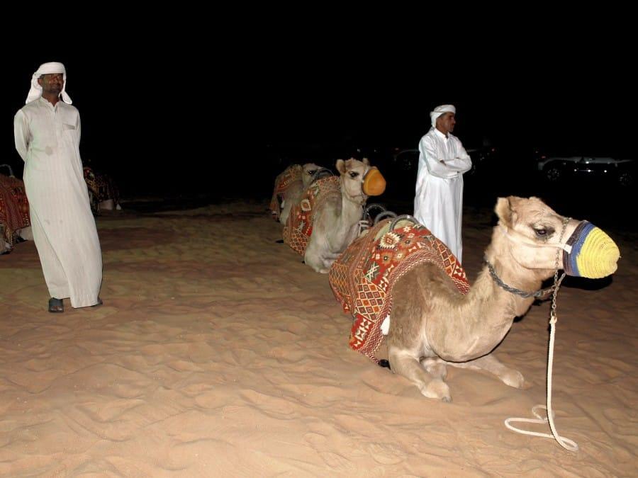 TravelXL-van-Limburg-DUBAI-kamelenritje