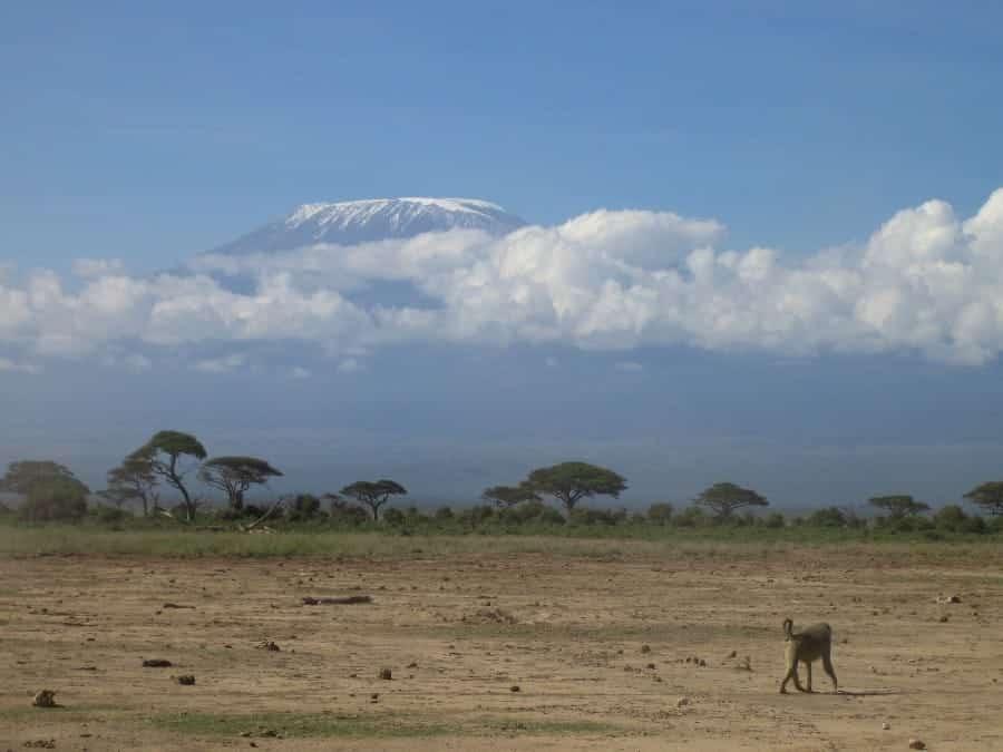 TravelXL-van-Limburg-KENIA-Kilimanjaro