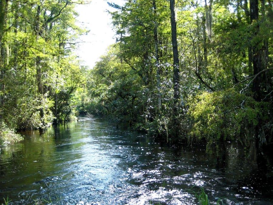 TravelXL-van-Limburg-FLORIDA-Everglades