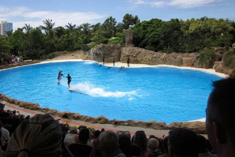 TravelXL-van-Limburg-TENERIFE-Parque-Loro-dolfijnen