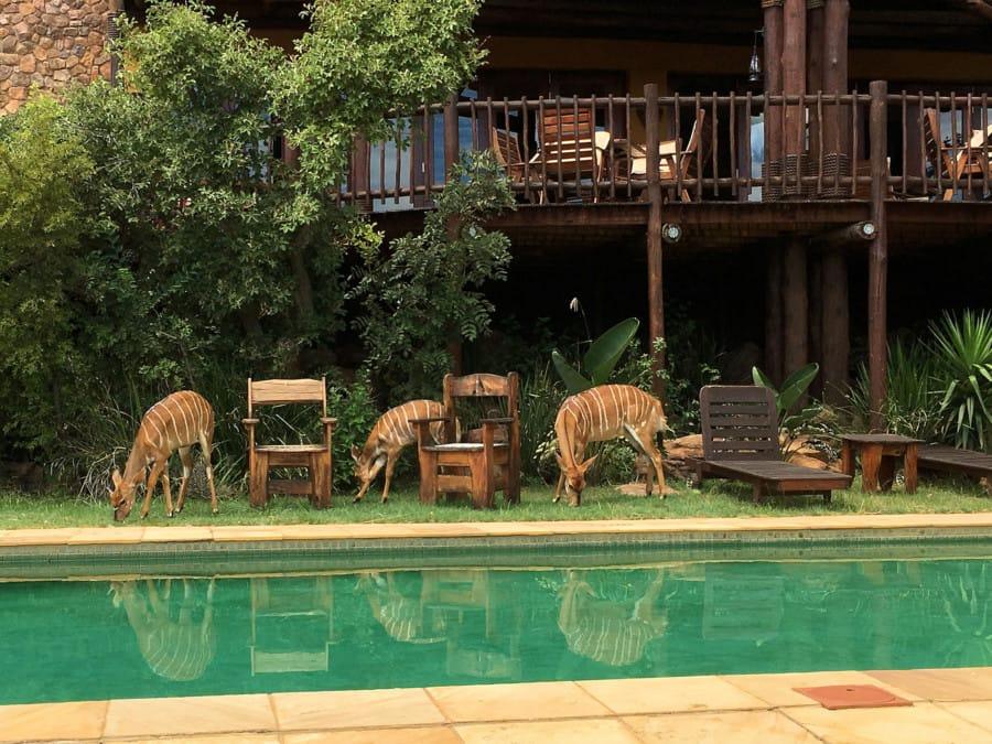 travelxl-van-limburg-zuid-afrika-kololo-nyala's