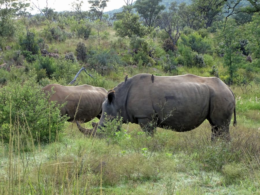 travelxl-van-limburg-zuid-afrika-welgevonden-neushoorns